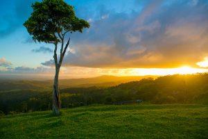 One tree hill Maleny