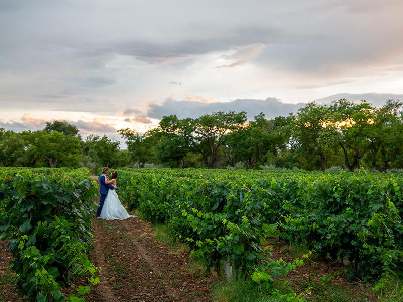 weddingcouplein VineyardbyMalenyWeddingPhotography